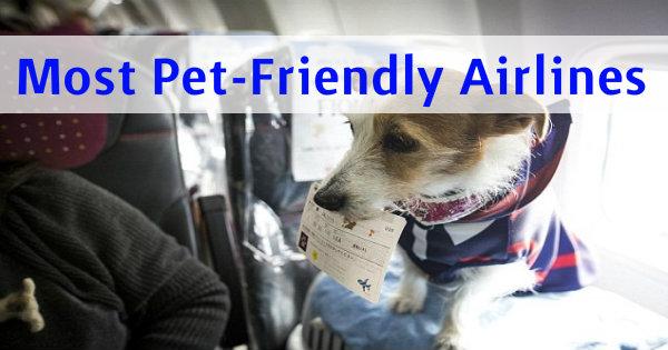 pets friendly