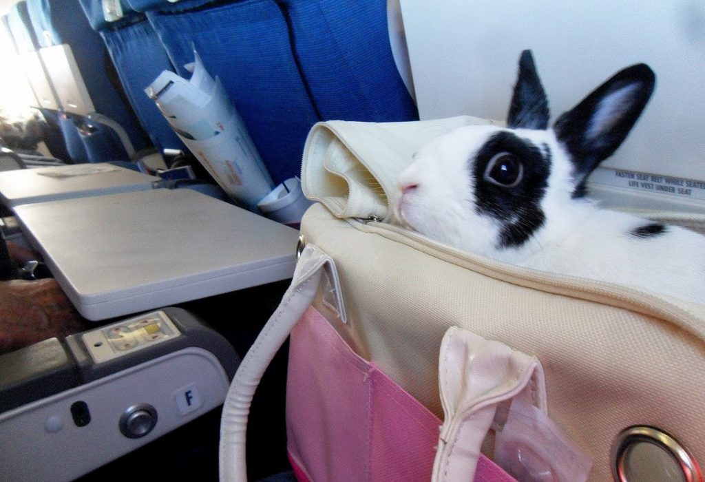 bunny in plane